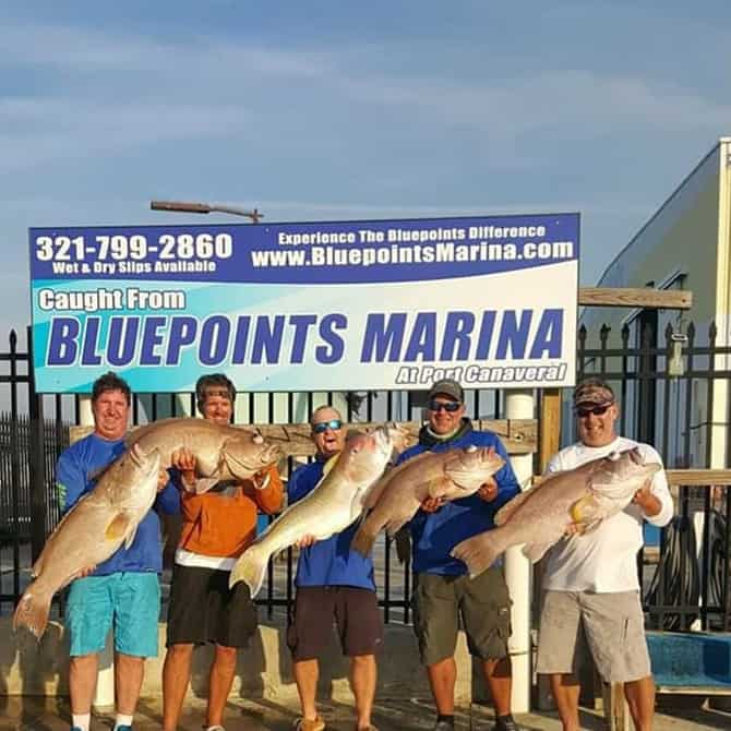 Fish charters Grouper catch