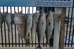 Anglers Envy Fresh Catch
