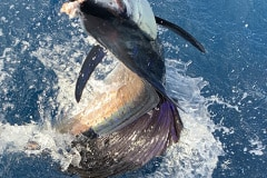 sailfishfishingcharter